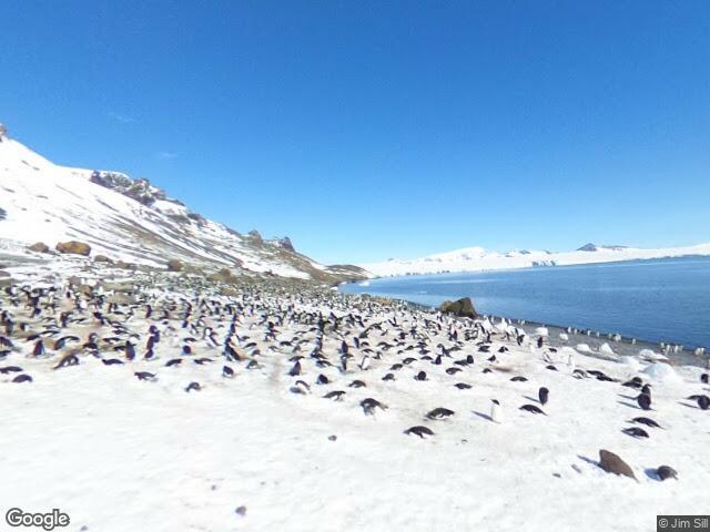 Brown Bluff Adélie Penguin Colony